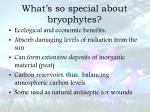 what s so special about bryophytes