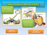nervio optico relaciones