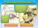 nervio optico relaciones1