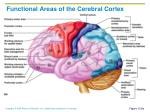functional areas of the cerebral cortex1
