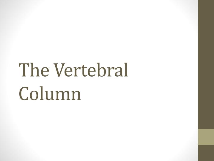 the vertebral column n.