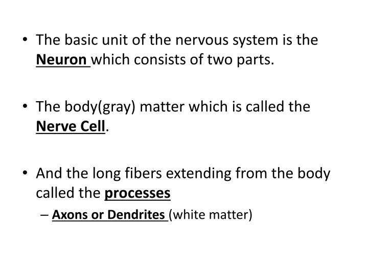 The basic unit of the nervous system is the