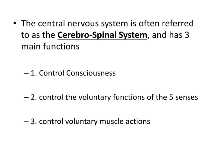 The central nervous system is often referred to as the