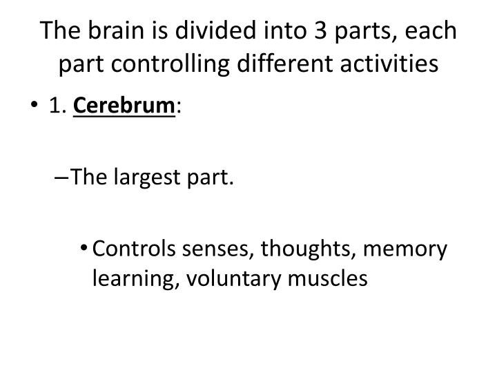 The brain is divided into 3 parts, each part controlling different activities