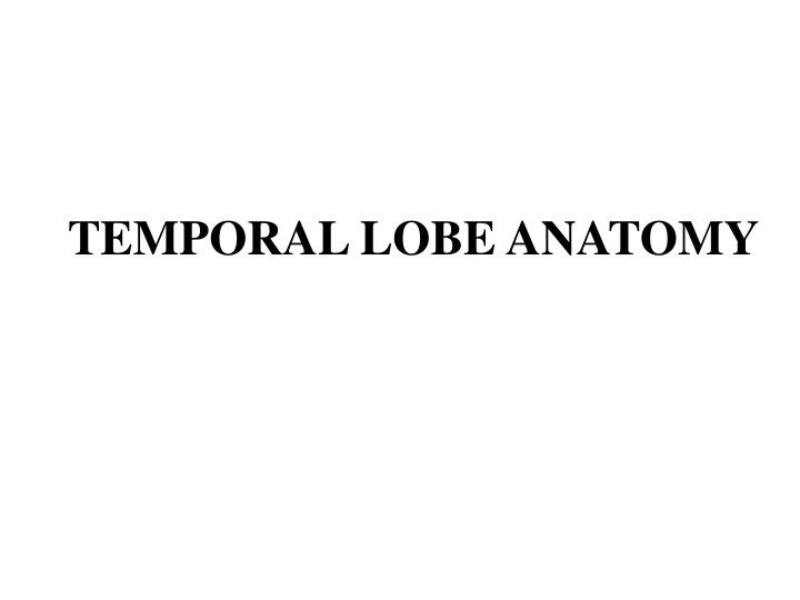 temporal lobe anatomy n.