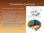 conexiones corticales