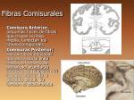 fibras comisurales2