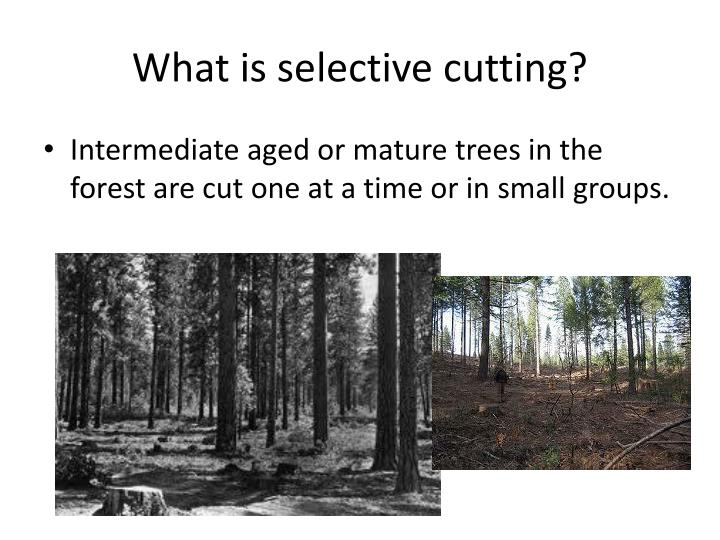 What is selective cutting?