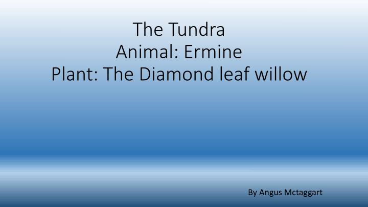 the tundra animal ermine plant the diamond leaf willow n.