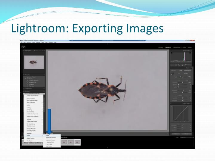 Lightroom: Exporting Images