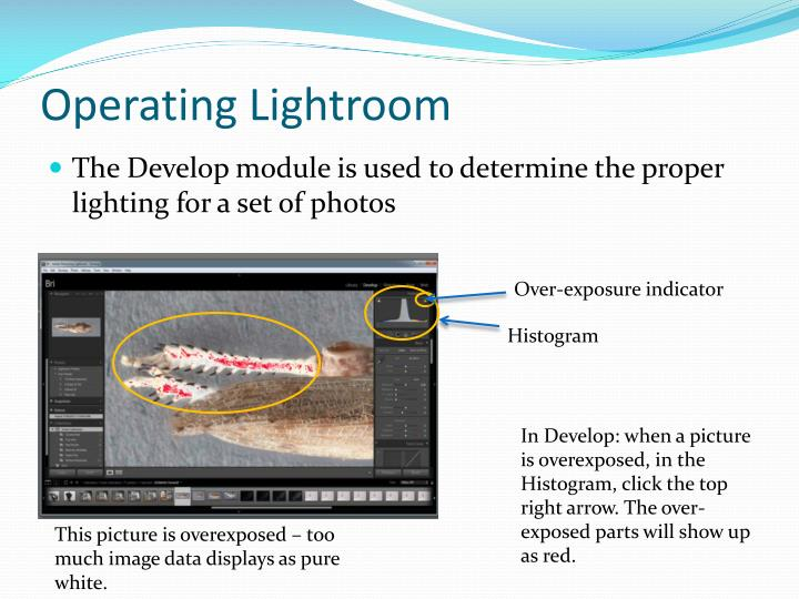 Operating Lightroom