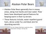 alaskan polar bears