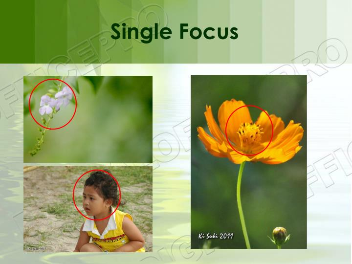 Single Focus