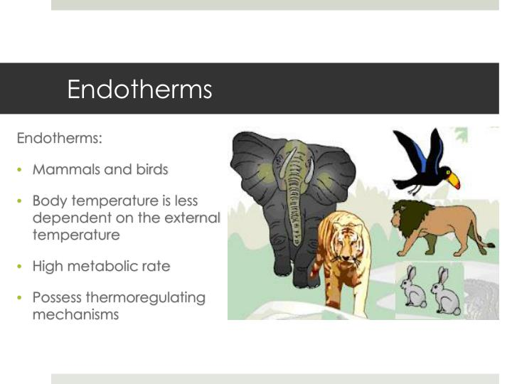 Endotherms
