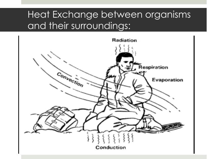Heat Exchange between organisms and their surroundings: