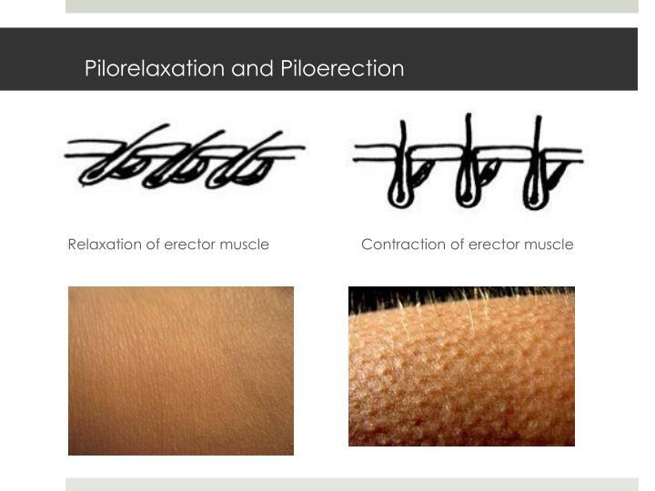 Pilorelaxation