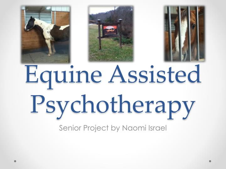 equine assisted psychotherapy n.