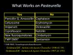 what works on pasteurella