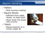 equine handling