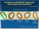 paciltaxel loaded mlnp suppresses rat carotid artery neointima