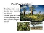 plant s adaptations