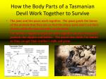 how the body parts of a tasmanian devil work together to survive