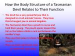 how the body structure of a tasmanian devil relates to their f unction