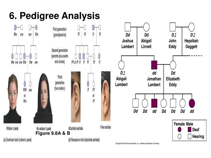 6. Pedigree Analysis