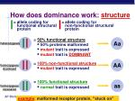 how does dominance work structure