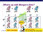 what s up with morgan s flies1