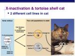 x inactivation tortoise shell cat