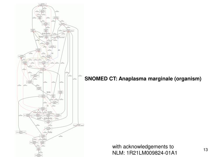 SNOMED CT: