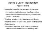 mendel s law of independent assortment1