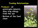 feeding relationships1