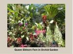 queen elkhorn fern in orchid garden