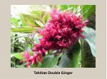 tahitian double ginger