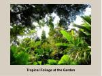 tropical foliage at the garden