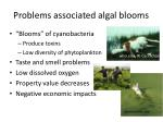 problems associated algal blooms