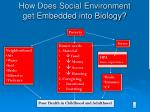 how does social environment get embedded into biology