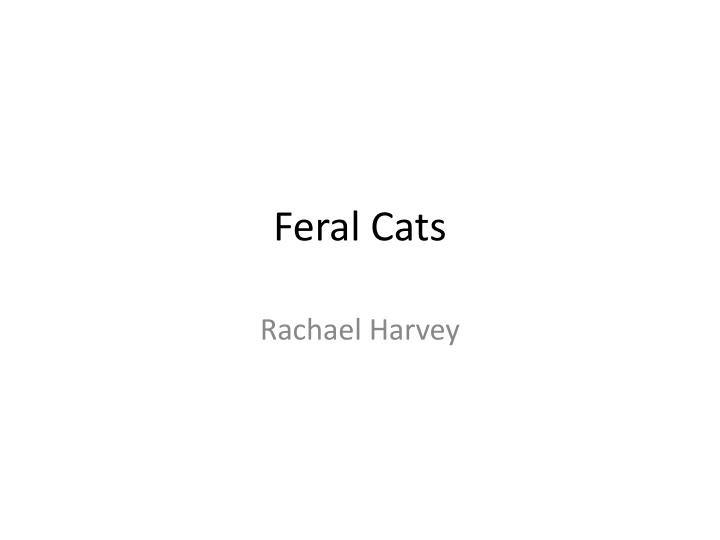 feral cats n.