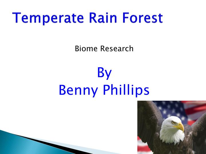 temperate rain forest n.