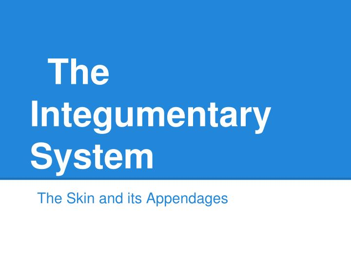 the integumentary system n.