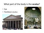 what part of the body is the oculus