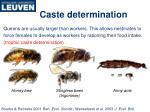 caste determination
