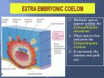 extra embryonic coelom