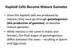 haploid cells become mature gametes