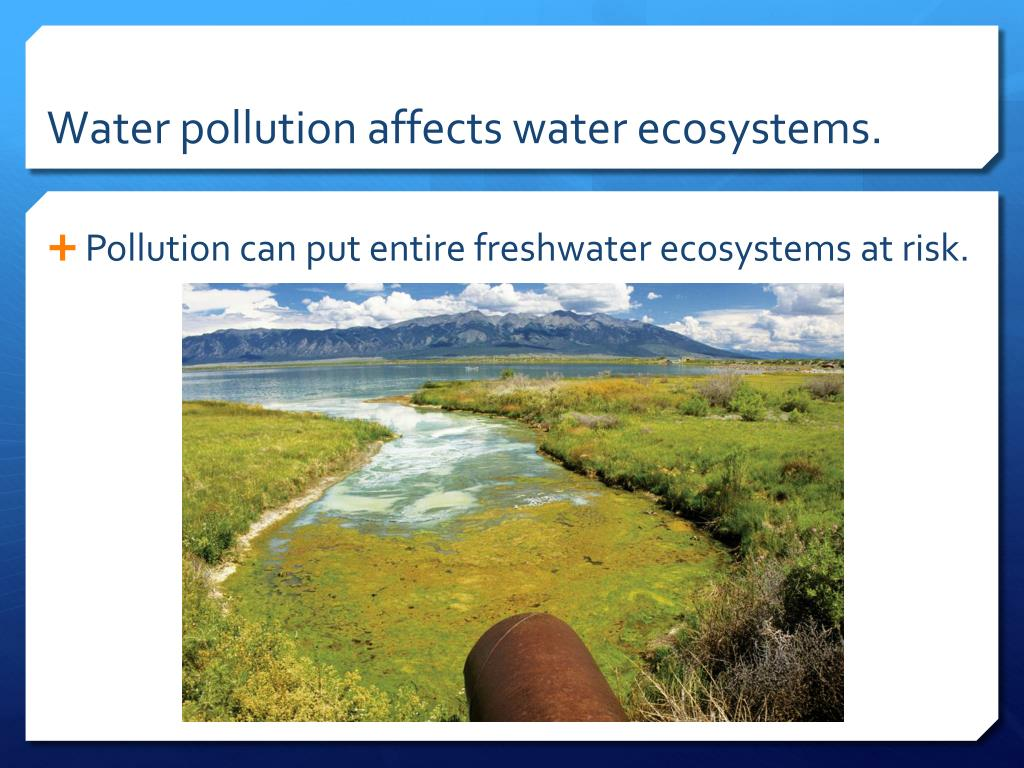 PPT - Chapter 16: Human Impact on Ecosystems PowerPoint ...