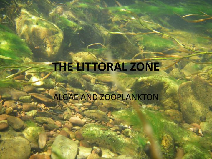 the littoral zone The upper intertidal zone the upper intertidal zone has the least amount of time submerged in water the organisms that inhabit this zone must be well adapted to withstand exposure to air.