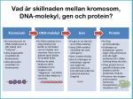 vad r skillnaden mellan kromosom dna molekyl gen och protein