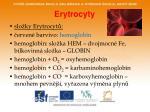 erytrocyty1
